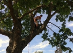 in-tree-beer-fest-custom