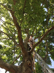 Tree Surgeon Brasted Chart