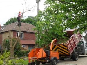 Tree Surgery Chartwell