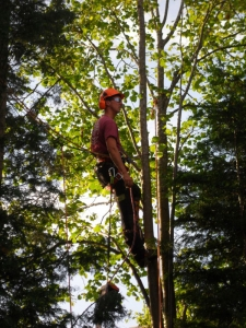 Tree Surgery Titsey
