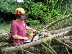 Tree Surgeon Crowhurst
